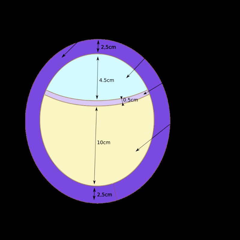 Modèle personnalisé lace/filet/poly 5